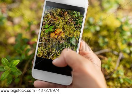 technology, picking season and people concept - hand with smartphone using mobile app to identify mushrooms