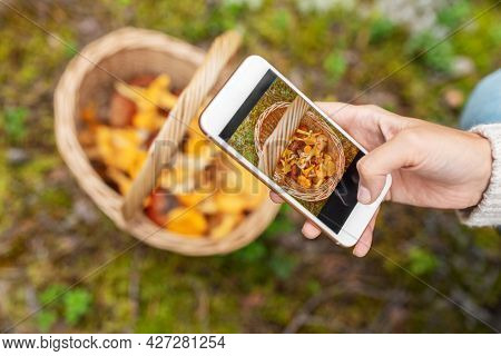 technology, picking season and people concept - hand with smartphone using mobile app to identify mushrooms in basket