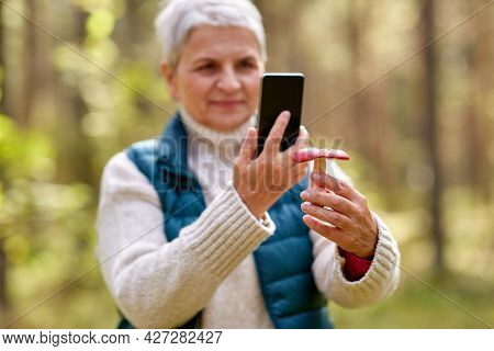 technology, leisure and people concept - senior woman with smartphone using app to identify mushroom in autumn forest
