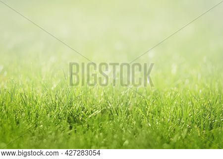 Close-up Of Fresh Green Lawns Background Texture. Selective Soft Focus, White Top Copy Space.
