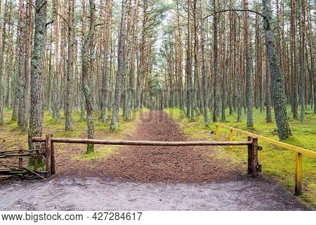 Beautiful Rural Landscape With An Old Wooden Fence And A Forest.