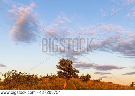 Poplar, Dunajovicke Kopce near Dolni Dunajovice, Palava region, Southern Moravia, Czech Republic