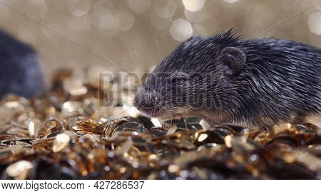 Cute Little Newborn Mice On Gold Coins On Showcase Of Expensive Luxury Store. Glamor Concept, Unsani