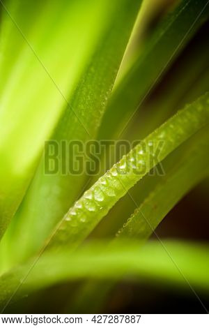 Close-up of the leaves of a plant.