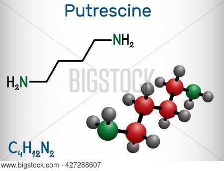 Putrescine Molecule. It Is Toxic Diamine, It Belongs To The Group Of Biogenic Amines. Structural Che