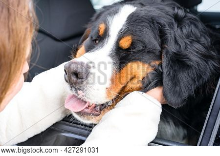 A Woman Squeezes The Muzzle Of A Dog Sitting In A Car. The Dog Stuck Its Muzzle Out Of The Window. A
