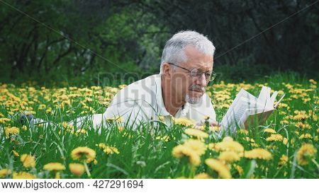 An Elderly Gray-haired Man With A Beard, Resting On The Grass Among Yellow Flowers In A Natural Park