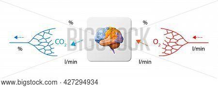 Human Bloodstream - Brain, Didactic Board Of Anatomy Of Blood System Of Human Circulation, Cardiovas