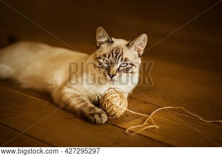 A Cute Happy Tabby Thai Kitten Is Lying On The Wooden Floor In The House, Having Played Enough With