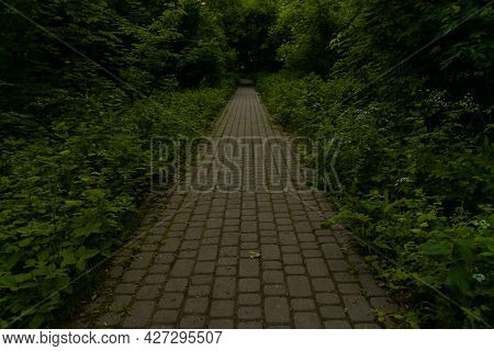 Pavement Road In Dark Of Tree In Wild Forest Environment Space Outdoor Lonely Place Concept Without