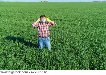 a man as a farmer poses in a field, dressed in a plaid shirt and jeans, protective face mask and rubber gloves, checks and inspects young sprouts crops of wheat, barley or rye, or other cereals