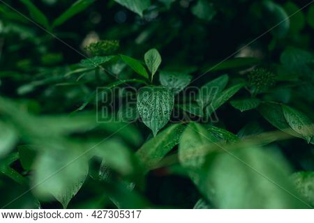 Rainforest Wet Foliage After Rain With Water Drops On Leave Moody Green Color Nature Photo