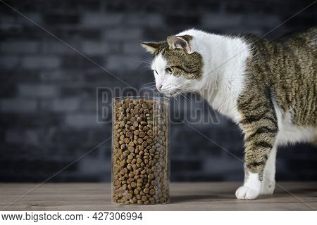 Tabby Cat Looking Curious To Dry Cat Food In Instorage Jar. Side View With Copy Space.