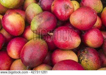 Mango Tommy Fruit In The Traditional Colombian Market - Mangifera Indica