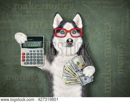 A Dog Husky Businessman In Glasses Is Holding A Calculator And A Fan Of Dollars. Make Money. Green B