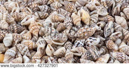 Summer Background Pattern From Seashells. Shell Close-up. Ocean Coast. Seashells Background. Top Vie