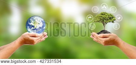 Exchange Planet In Human Hand With A Small Tree In Human Hand And Energy Icon Environmental Conserva
