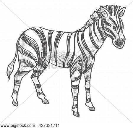 Zebra Animal, Equine Mammal With Stripes Sketch