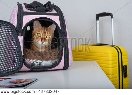 A Bengal Cat Looks Curiously From A Padded Carrier Next To A Suitcase.