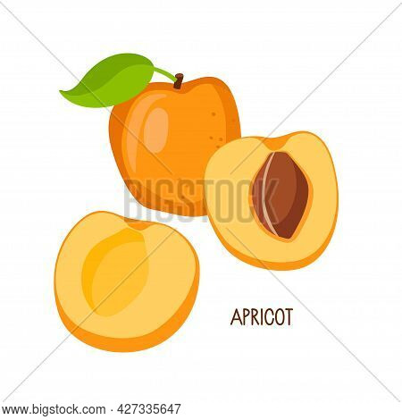 Apricot Fruit Isolated On White Background. Whole Fruit And Cut Into Halves. Farmer Market Logo. Org
