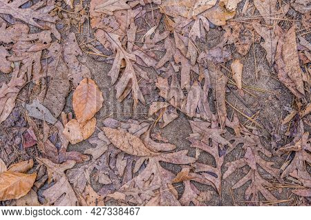 Variety Of Colorful Fallen Leaves Covering The Trails In The Forest Crushed And Torn Decaying On A S
