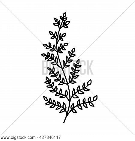 Single Hand Drawn Fern Leaf. Doodle Vector Illustration. Isolated On A White Background.