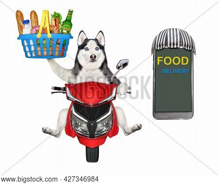 A Dog Husky Courier Delivers A Plastic Basket Of Food On A Red Moped. White Background. Isolated.