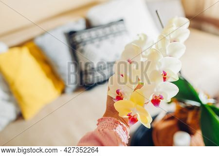Woman Holding Yellow Orchid In Blossom Blooming On Coffee Table. Home Decorated With Flowers And Pla