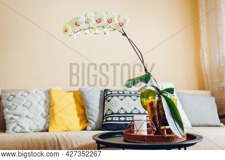 Interior Of Living Room. Yellow Orchid With Cascade Blossom Blooming On Coffee Table By Candle. Home