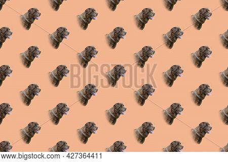 Repeating Portrait Brown Dog On Coral Background. Head Of Chocolate Labrador. Gorgeous Pet With Gray