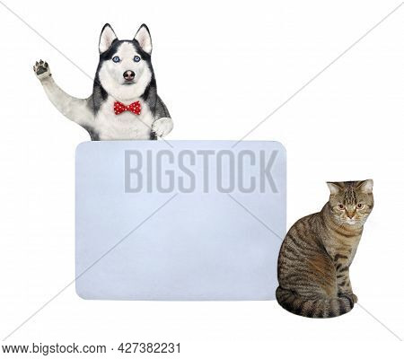 A Dog Husky And A Beige Cat Are Near A Big Blank Poster. White Background. Isolated.