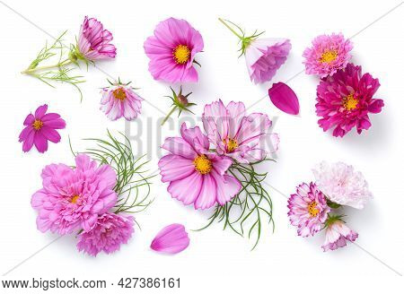 Set Of Cosmos Flowers Isolated Over White Background. Cosmos Bipinnatus. Top View