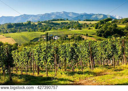 vineyard in south Jurancon, France