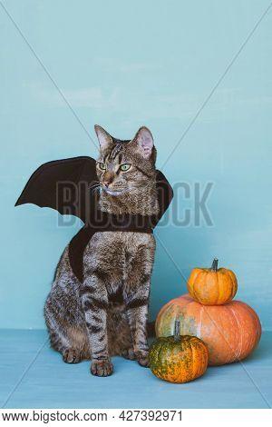 Cute Funny Tabby Cat Dressed As Bat With Black Wings And Orange Pumpkins.
