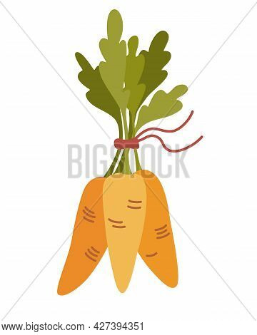 Orange Carrots In A Bunch. Fresh Cartoon Vegetable. Carrots With Lush Tops. Perfect For A Farm Produ