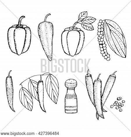 Set Of Peppers Paprika Ramiro Chili Pepper And Black Pepper Vector Illustration Hand Drawing Sketch