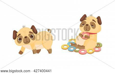 Cute Pug Dog Puppy Sitting With Stuffed Belly Among Doughnuts And Walking Vector Set