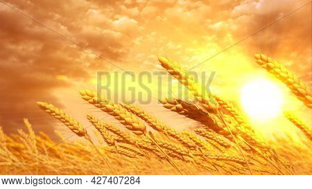 Ripe Rye Spikelets Field At Pretty Sunrise Background - Concept Nature 3d Rendering