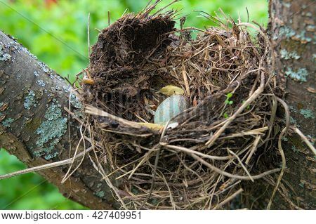 A Blue Bird Egg In A Nest In A Tree.