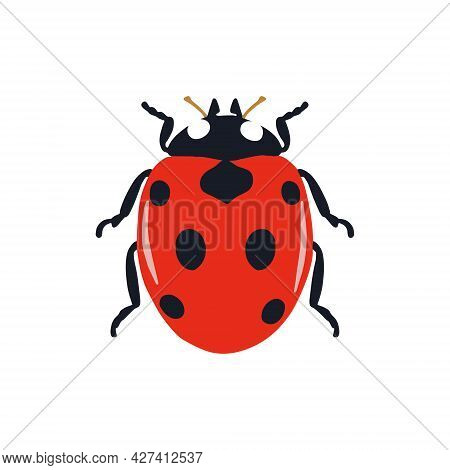 Vector Drawing Of A Ladybug, An Icon On A White Background