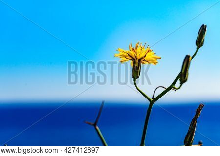 Flowers On Mediterranean Coast. Plants Against Blue Sea Water. Sunny Day In Spring Time
