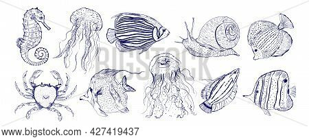 Collection Marine Animal Fish.sketch Outline Hand Drawn.crab, Snail, Seahorse, Jellyfish And Other.