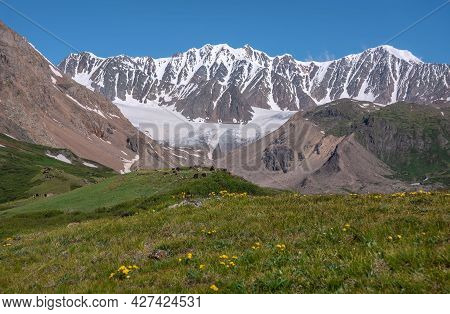 Amazing View With Bright Yellow Wild Flowers On A Green Meadow And Thickets Of Dwarf Birch Against T