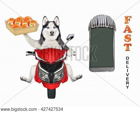 A Dog Husky Courier Delivers A Box Of Sushi On A Red Moped. Fast Delivery. White Background. Isolate