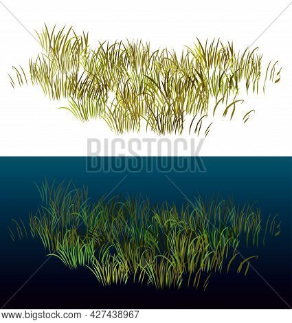 Grass Isolated On White. Isometric View Grass For Landscapes. Realistic 3d Grass Vector Illustration