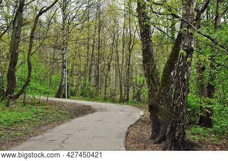 Panorama Of The Park. The Asphalt Alley Of The Park Against The Background Of Trees. Spring In The P