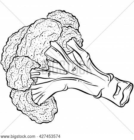 Broccoli Lies. Hand Drawn Vector Illustration With Black Outline Isolated On White Background. Colle