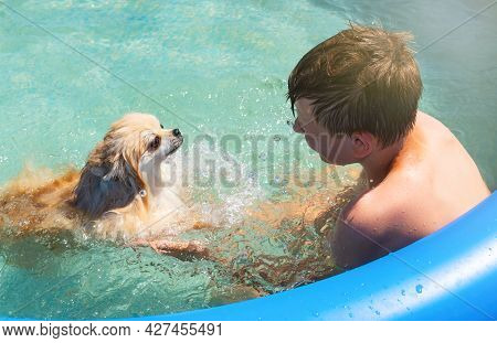 A Dog With A Boy Bathe In The Pool On A Summer Sunny Day. Pomeranian