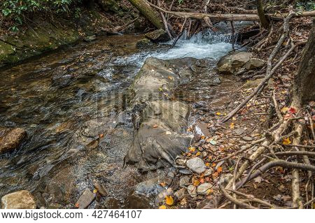 Standing On A Boulder In The Flowing Water Of The Stream Cascading Over Rocks And Branches With Smal