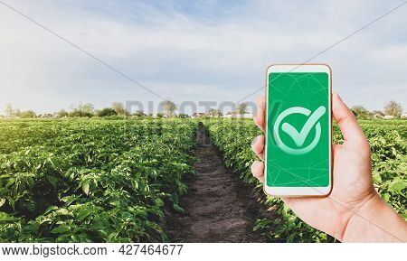 Phone With A Quality Mark On A Farm Plantation. Growing Organic Vegetables. Control Permissible Dose